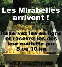 Recevez les mirabelles directement chez vous